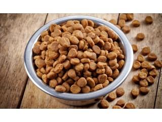 Как правильно выбрать сухой корм для собаки?