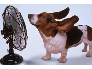 Как помочь вашей собаке в жару?