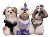 Краска для шерсти собак