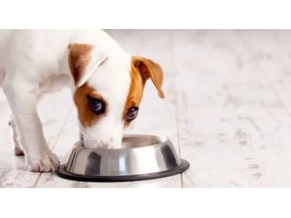 Питательная ценность корма – что лучше для вашей собаки