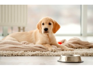 Почему так важно правильно кормить собаку?
