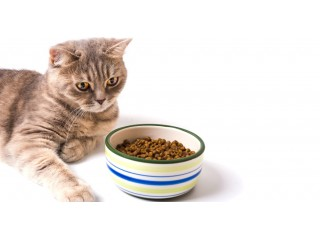 Сухой или влажный корм – что выбрать для своей кошки