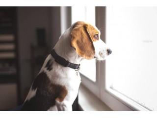 В доме появилась собака – к чему нужно быть готовым