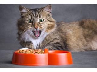 Корм Брит – только лучшее для вашей кошки